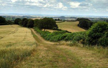 Coleridge Way above Nether Stowey_