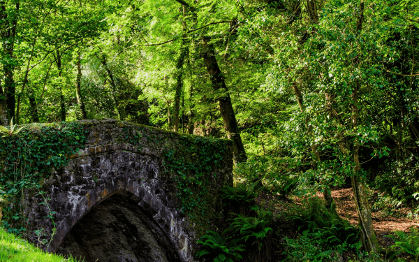 Image of Bridge near woods Nether Stowey