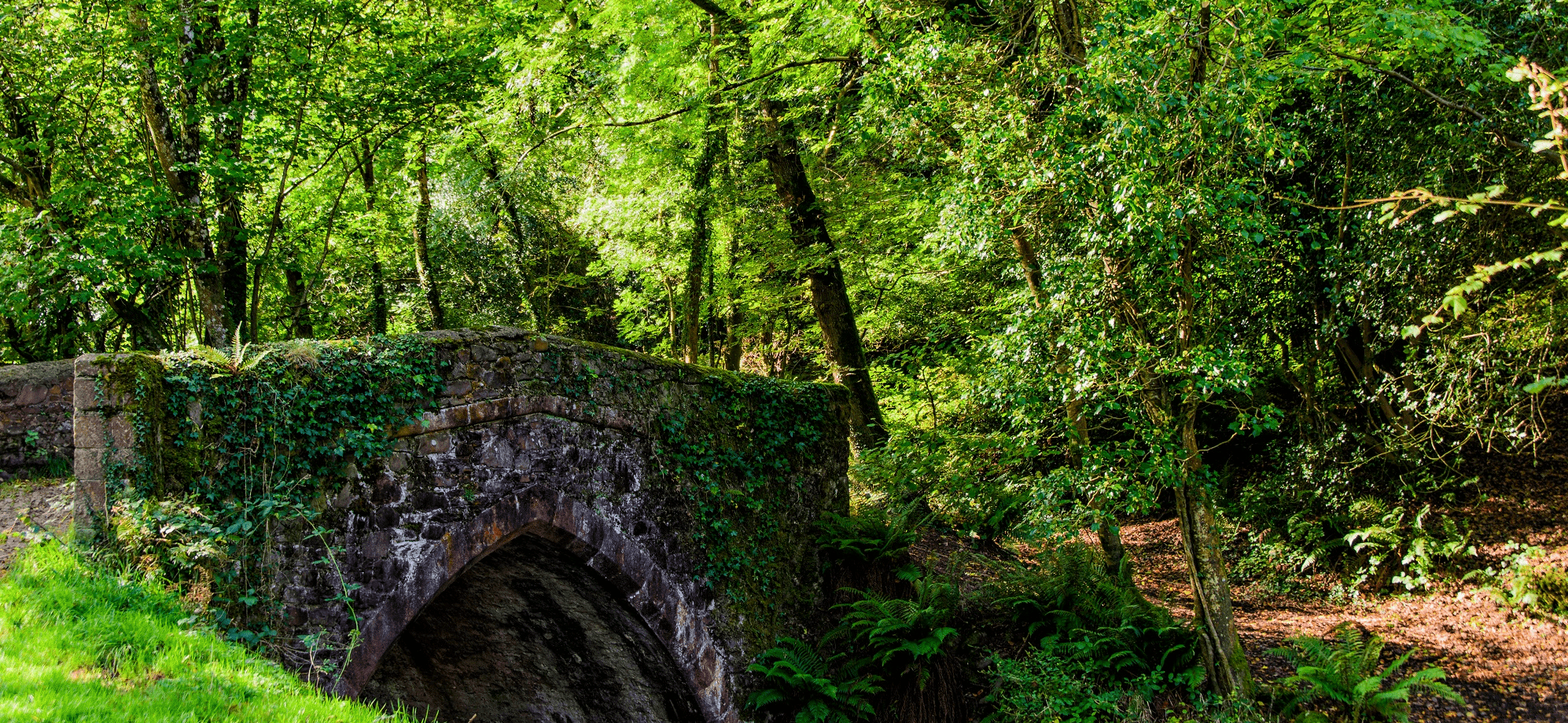 Image of Bridge near woods Nether Stowey