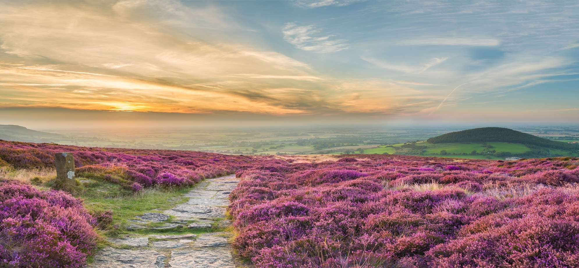 Walking holidays Footpath through heather at Cleveland Way, North York Moors.