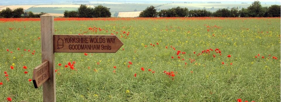 Signpost-Walking-Wolds-Way
