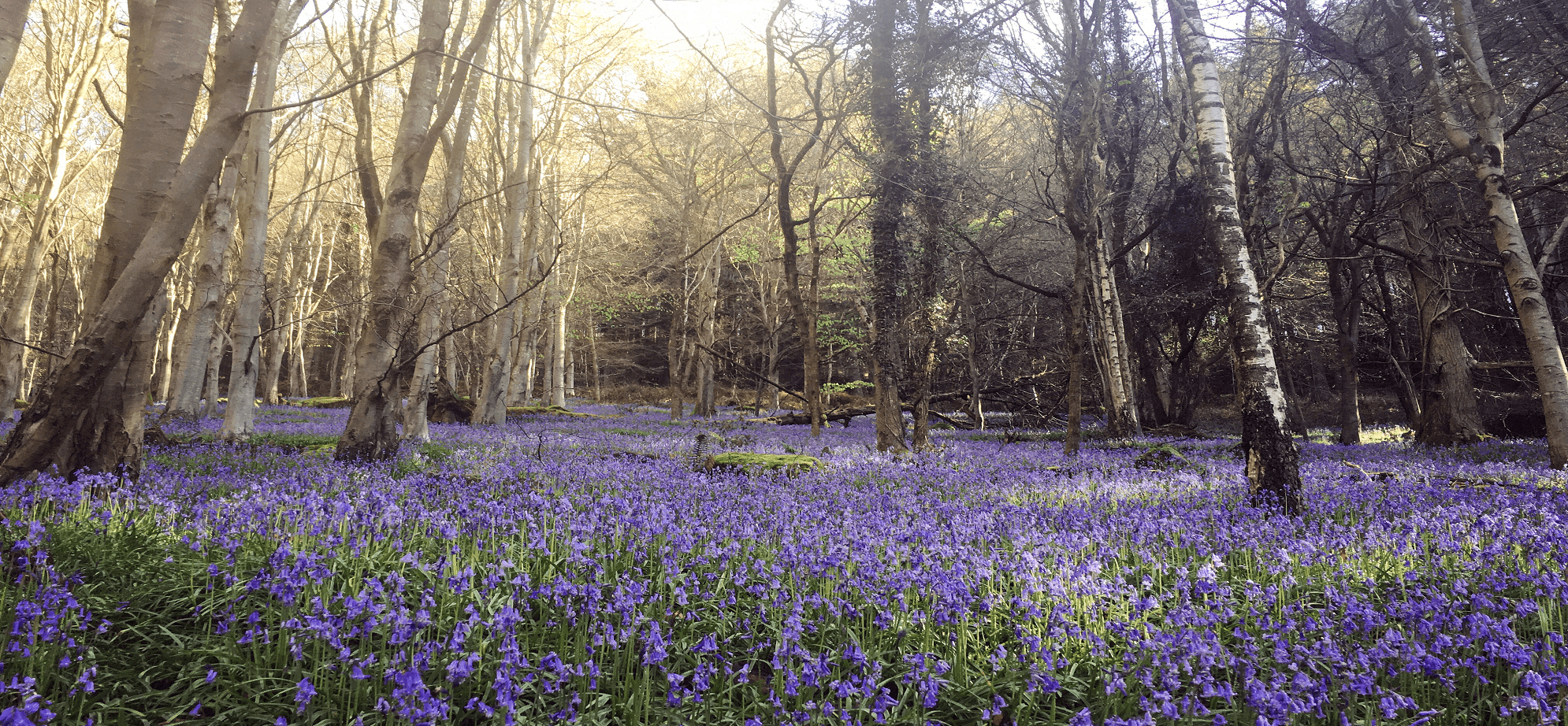 Wye Valley Woods in Spring