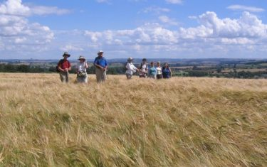 Walkers in field