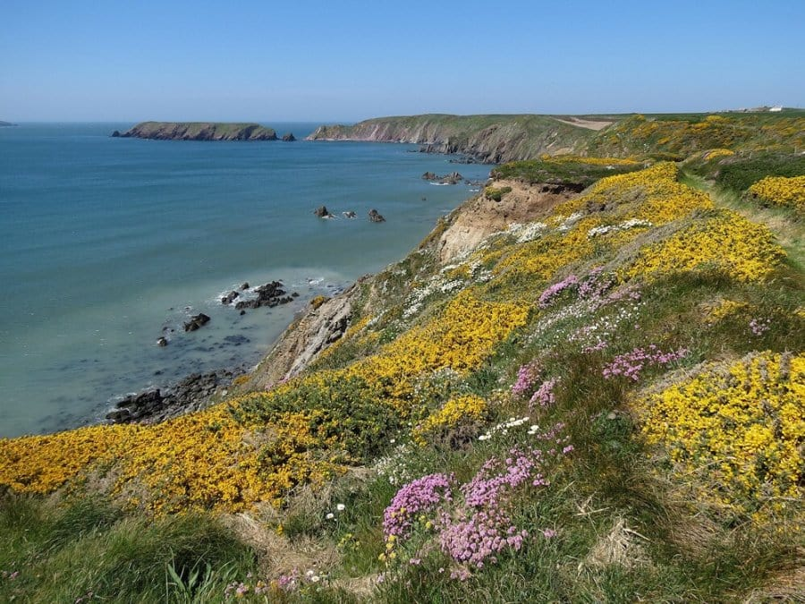 Spring flowers-Pembrokeshire-Coastal-Path