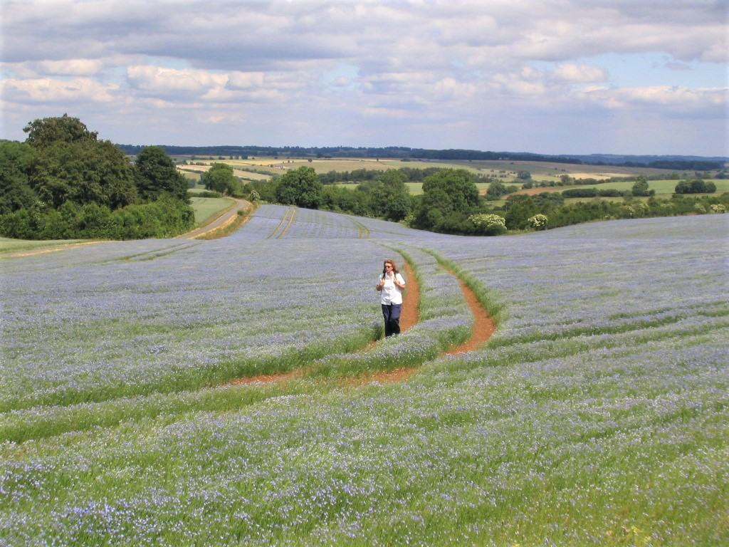 Image of Anne, hiking through fields of flowers on a Cotswolds walking holiday