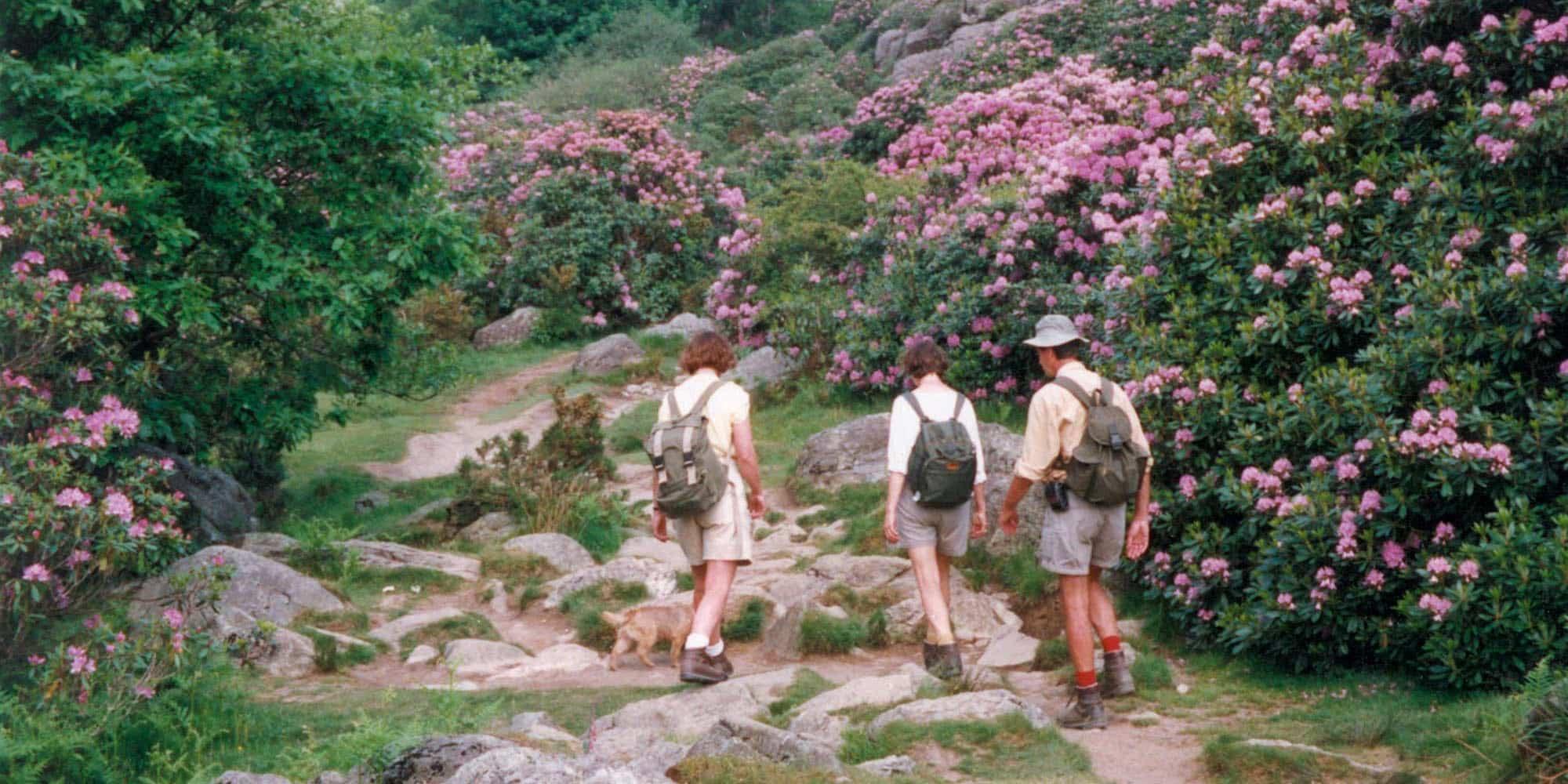 Celtic Trails History