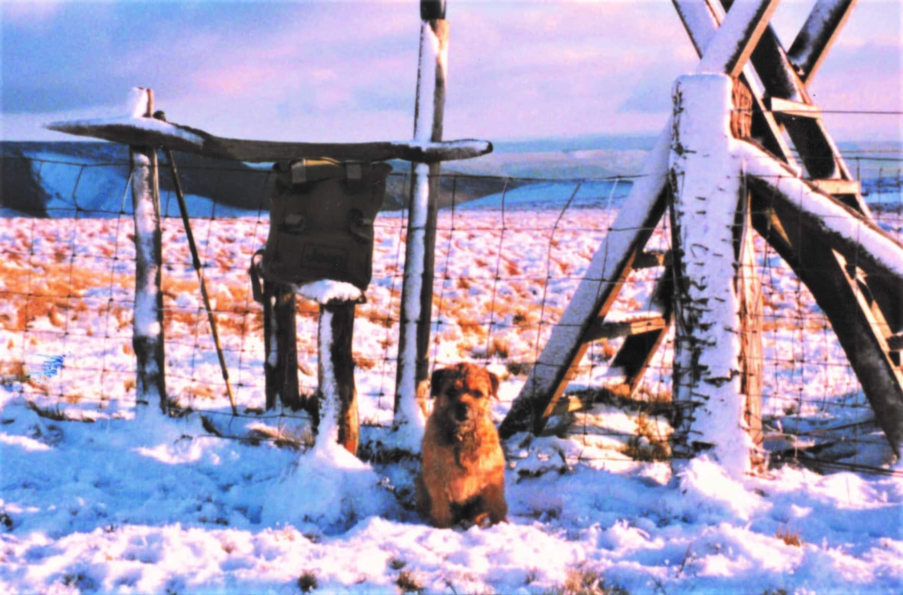 Fergus in snow