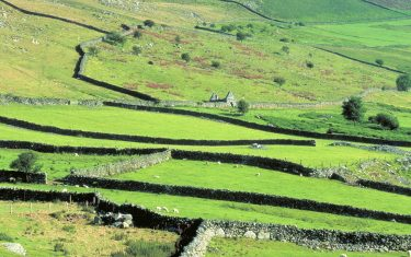 image of Welsh countryside walking sheep and fields