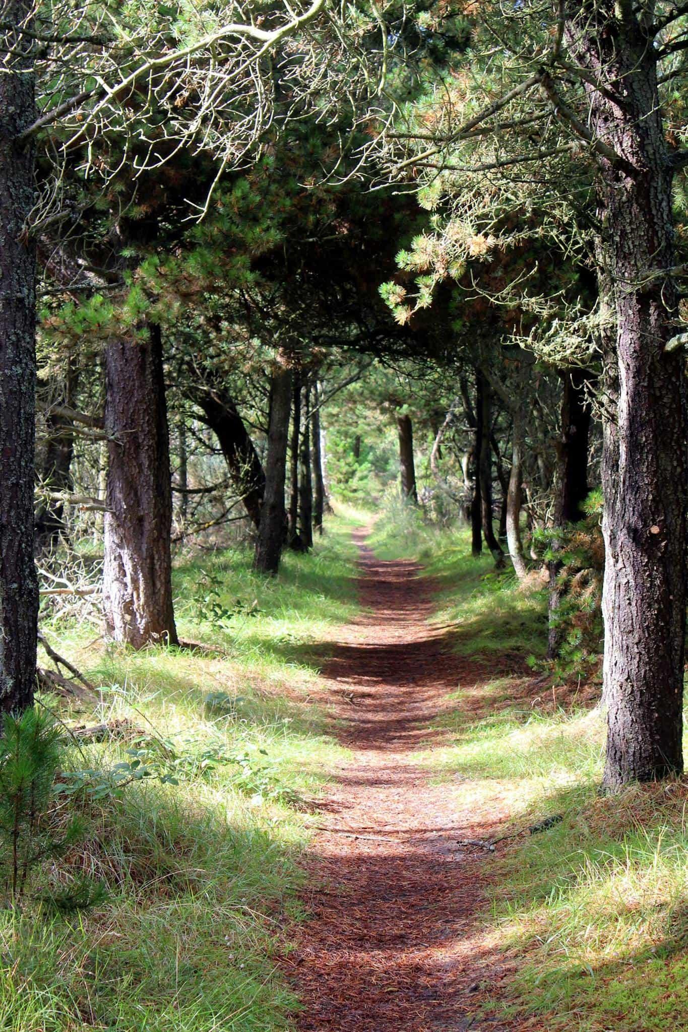 Scotland Whiskey Walks