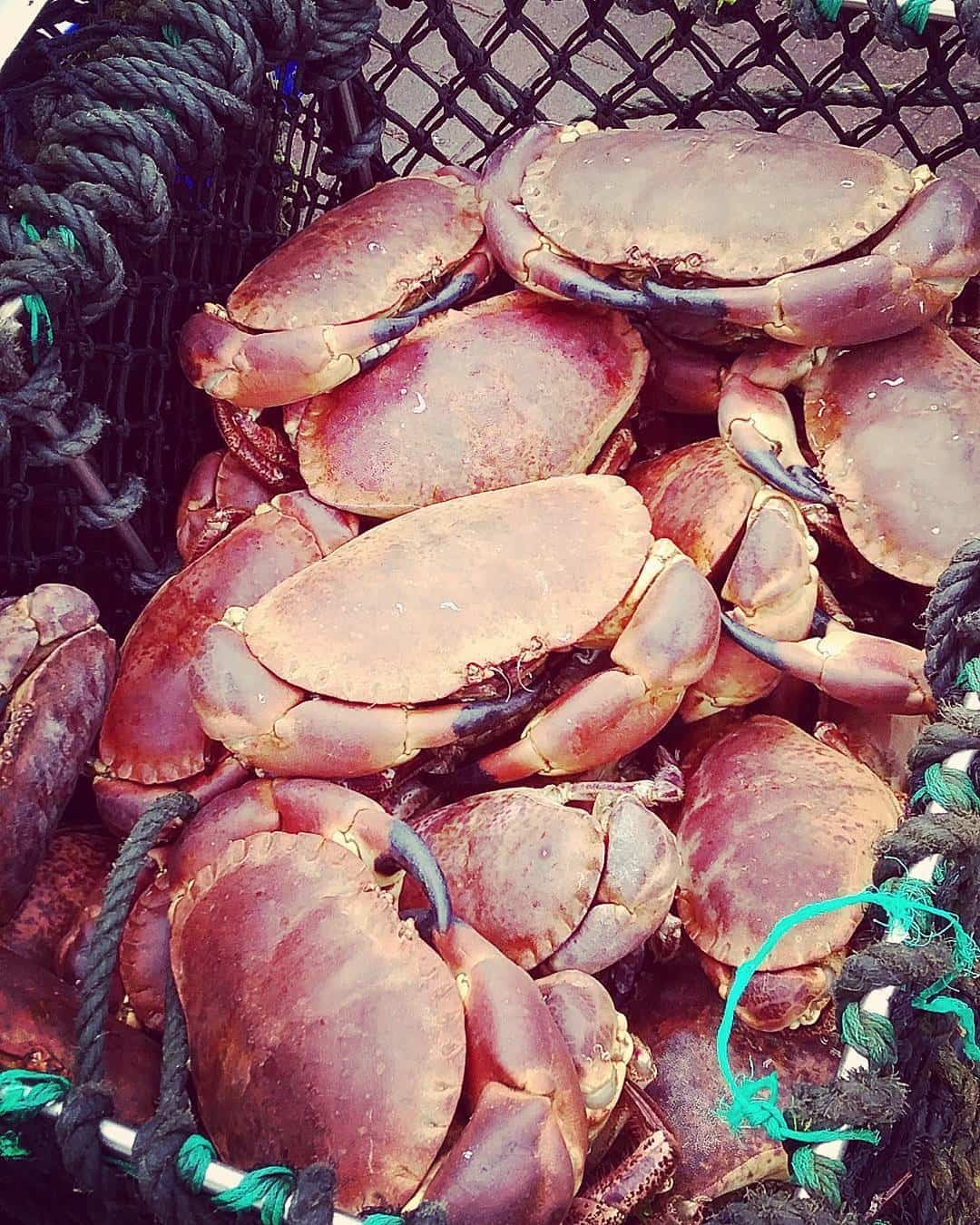 Crabs trap in Brodick