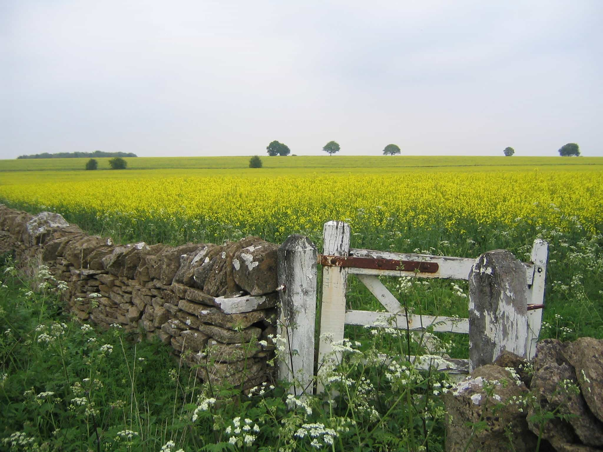 Walknig through Cotswolds countryside