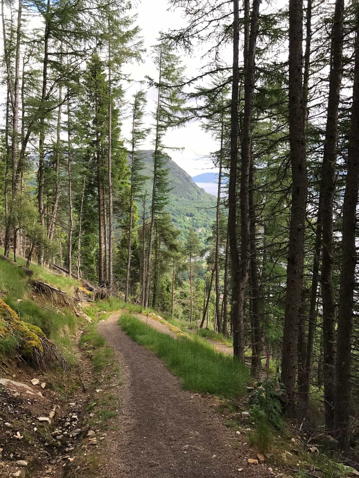 Descent into Invermoriston, Hiking the Great Glen Way