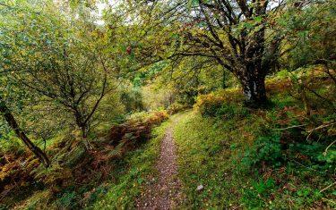 Walking through Horner wood