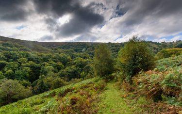 Coleridge Way through Horner Wood
