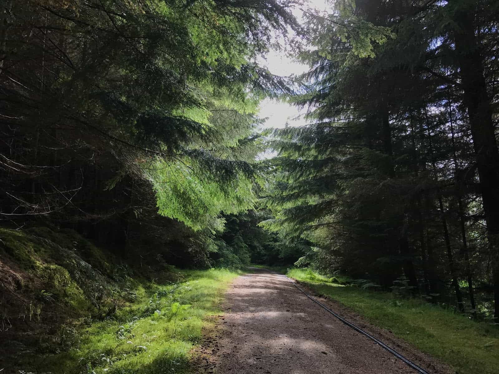 forest track Fort Augustus to Invermoriston, Hiking Holidays in Scotland
