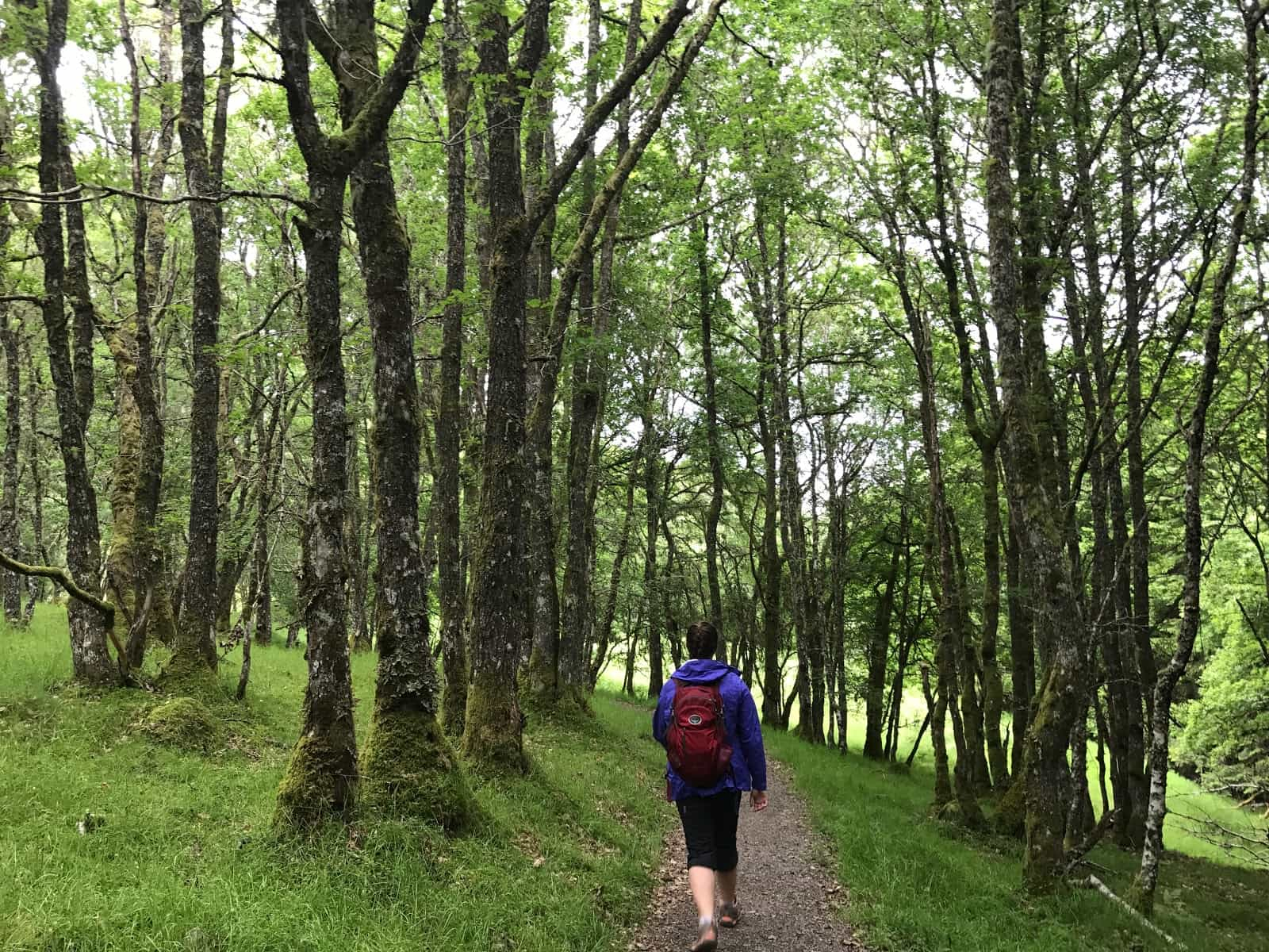 Invermoriston to Drumnadrochit, The Great Glen Way Active holidays