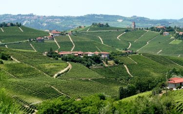Landscape_of_vineyards_in_Piemonte,_Italy