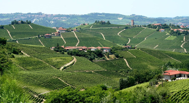 Landscape_of_vineyards_in_Piemonte,_Italy