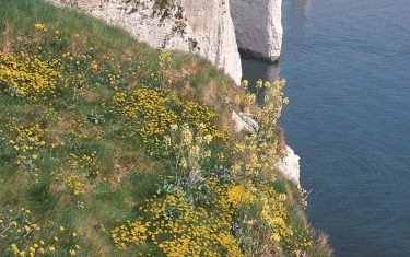 Old Harry Rocks along the Jurassic Coast