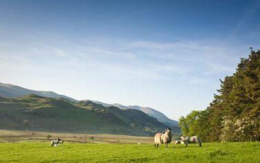 Rural Landscape on The Cumbria Way