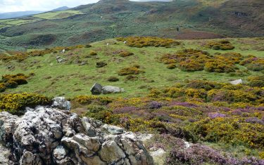 Synchant Pass near Conwy and Penmaenmawr, North Wales Coast Path