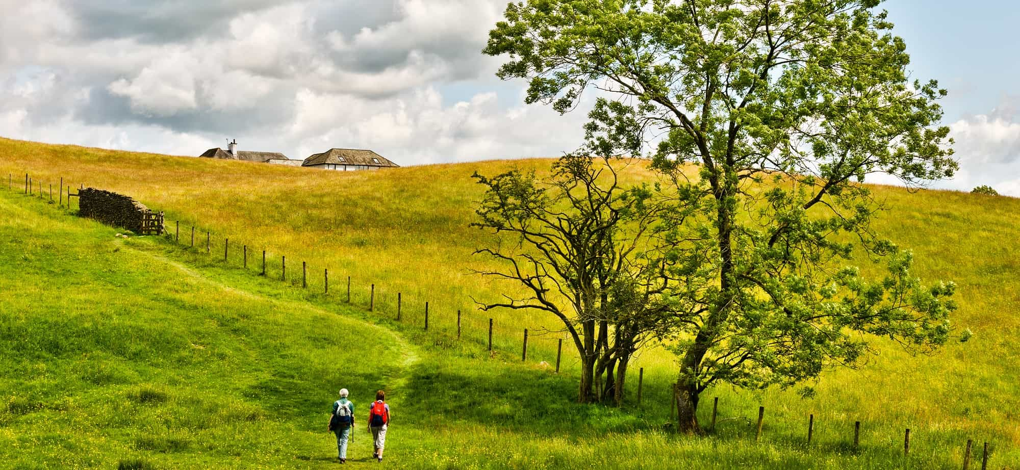 Two people walking through a golden meadow near Far Sawrey, Cumbria, in the English Lake District National Park