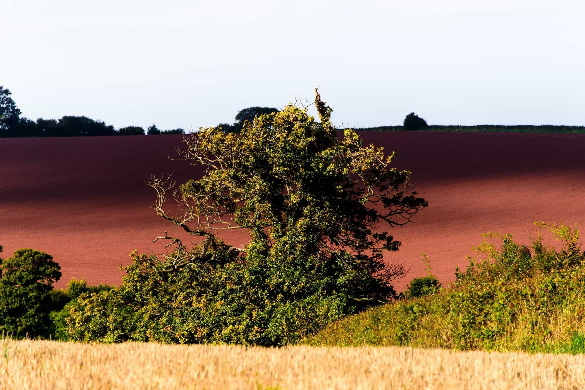 Watchet fields, walking holidays for singles England