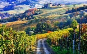 Vineyards-and-hiking-in-Piedmont